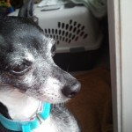 Meet Minka